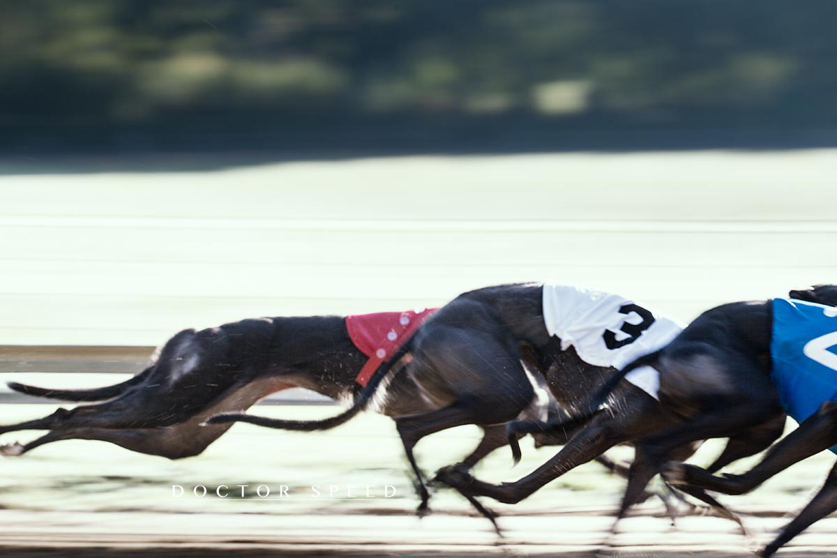 EM Revanche 2015, Greyhound, Windhund