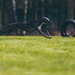 Wilma, Blissfull Joy of Lordly Essence, auf dem Coursing Feld