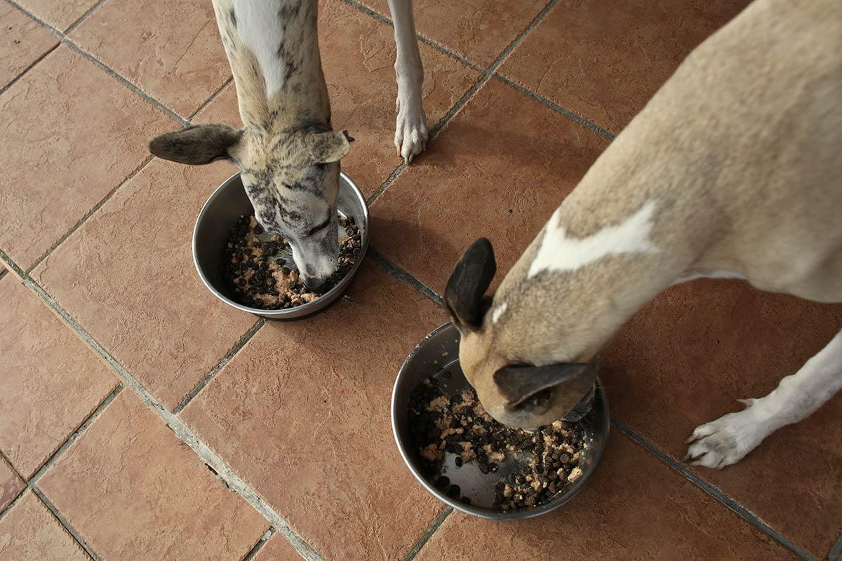 Mono und Danny lieben die Kombi aus Trockenfutter und Lachs-Topping sehr.