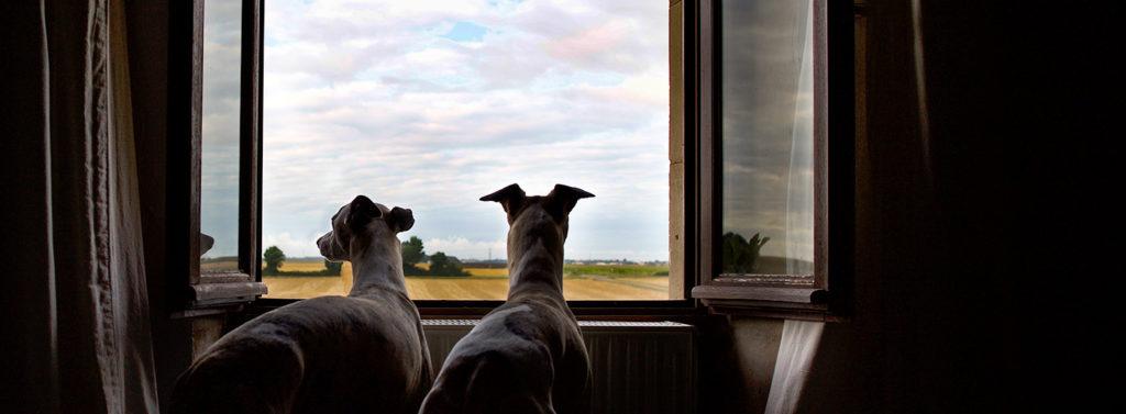 Mono und Danny am Fenster