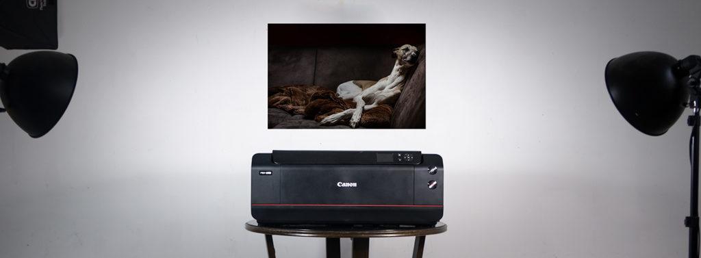 Der Canon Pro 1000 druckt bis zu A2 große Fotos