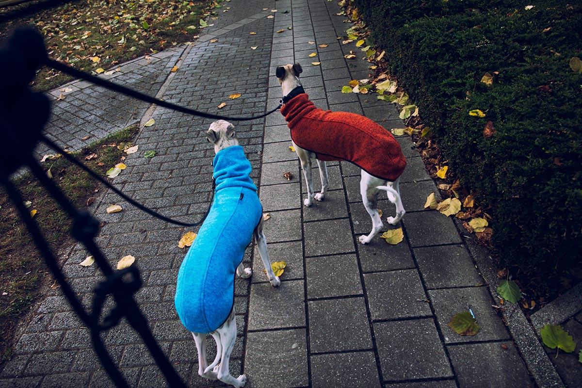 Danny und Mono in ihren Pullis, die bei Leinenspaziergängen Brustkorb und Rücken warm halten.