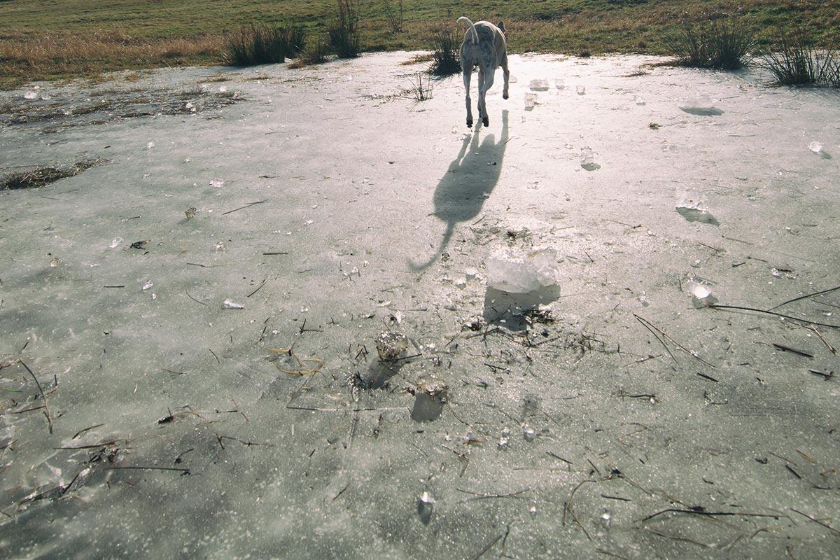 Danny auf dem Teich