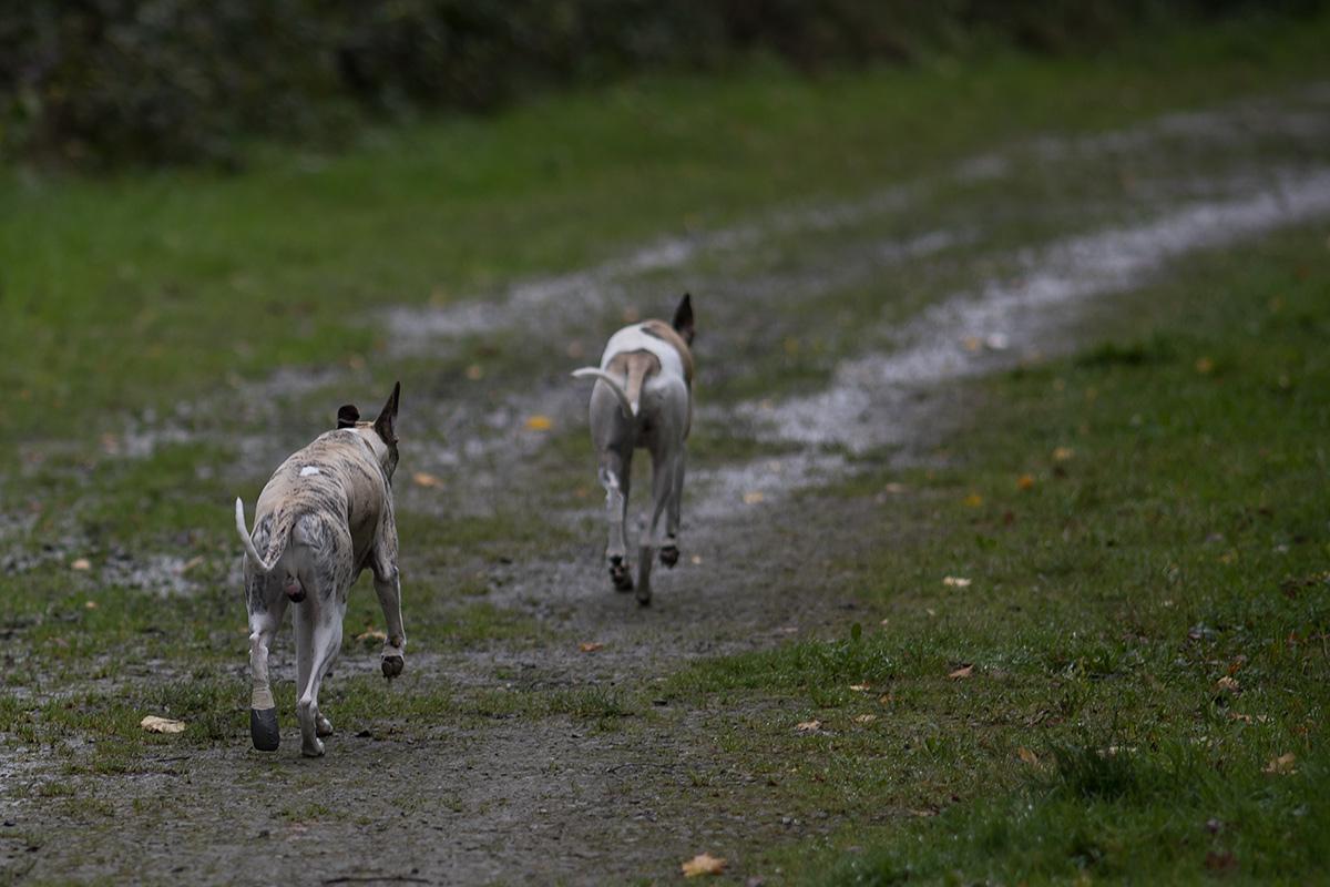 Wenn wir schon beim Threewheeler sind - hier sind zwei Einohrer (einer mit Klumpfuß) unterwegs in ihrem Lieblingsrevier.