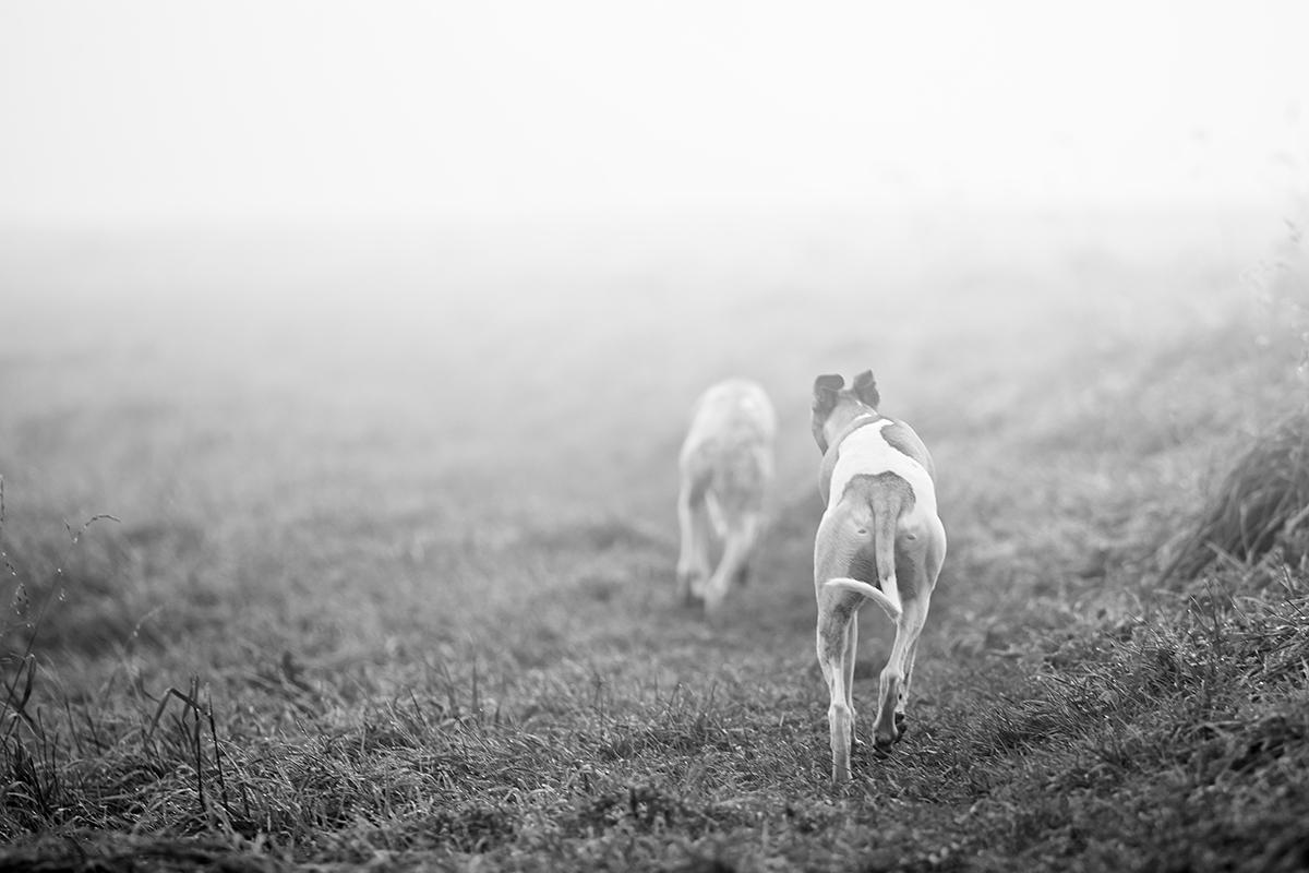 Ein Morgen in der Nebelbank