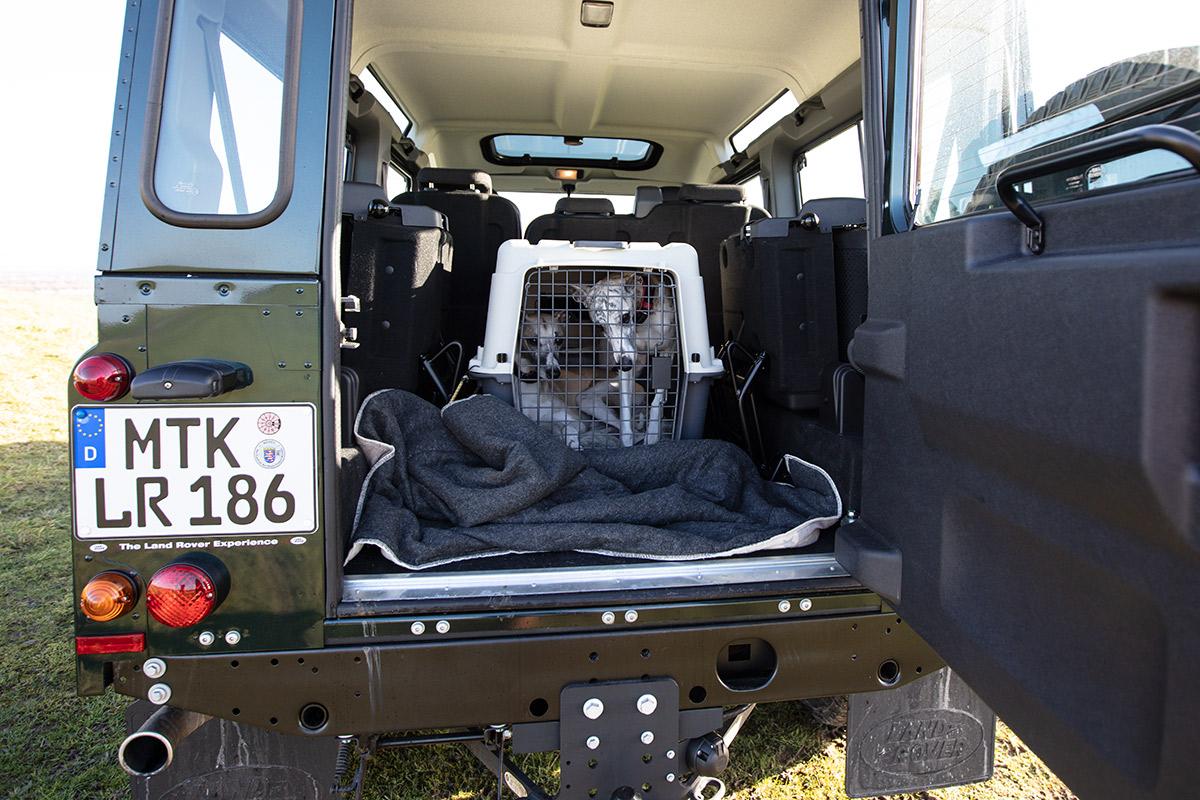 Der Hund im Auto - Amnesty! Unser Defender war ein Testwagen. Deshalb konnten wir weder die hinteren Sitze ausbauen, noch Bretter installieren. Die größte Hundebox, die zwischen die Radläufe passt, ist 60 Zentimeter breit und eindeutig zu klein für zwei Whippetrüden.