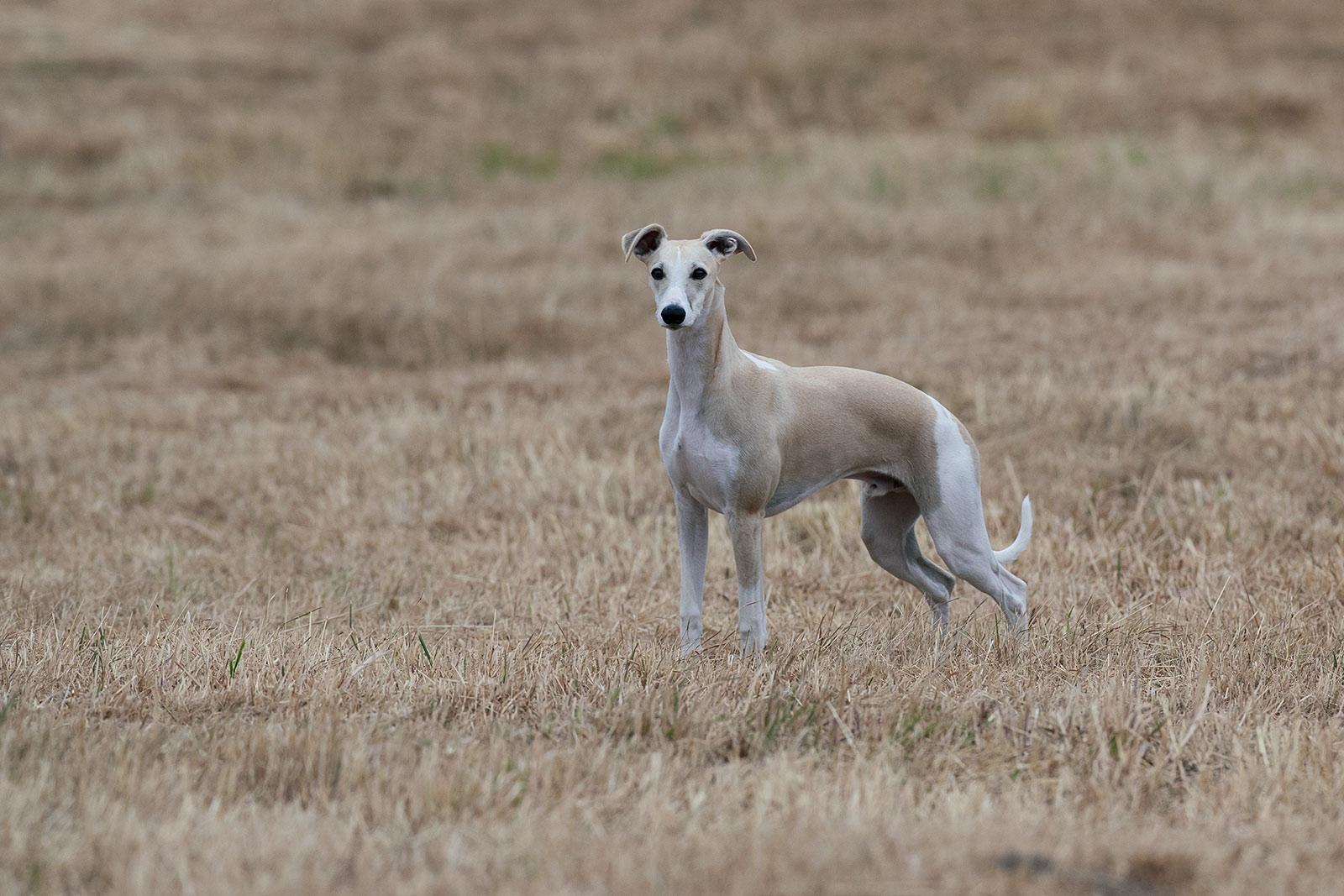 Hupsi steht mehr rum, als dass er läuft. Das ist auch sehr ungewöhnlich.