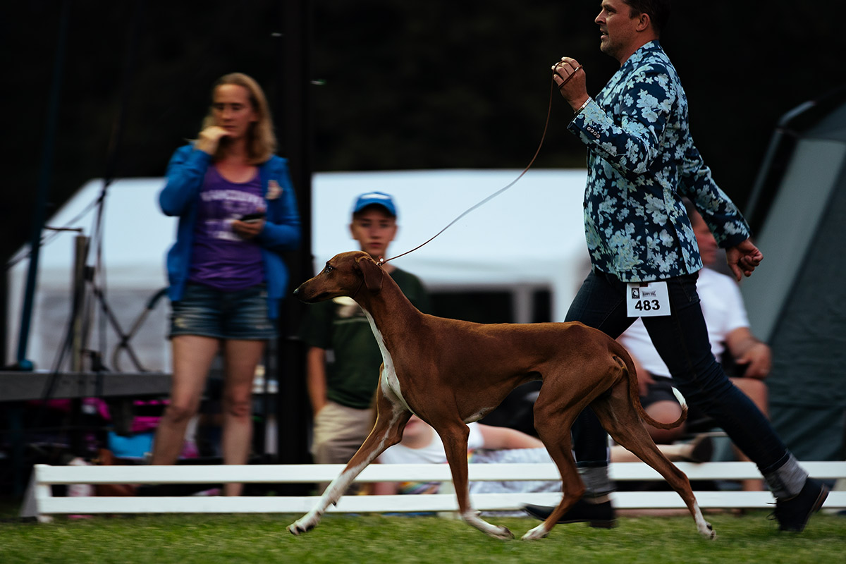 Perfektes Handling beim Sighthound Festival Donaueschingen 2018