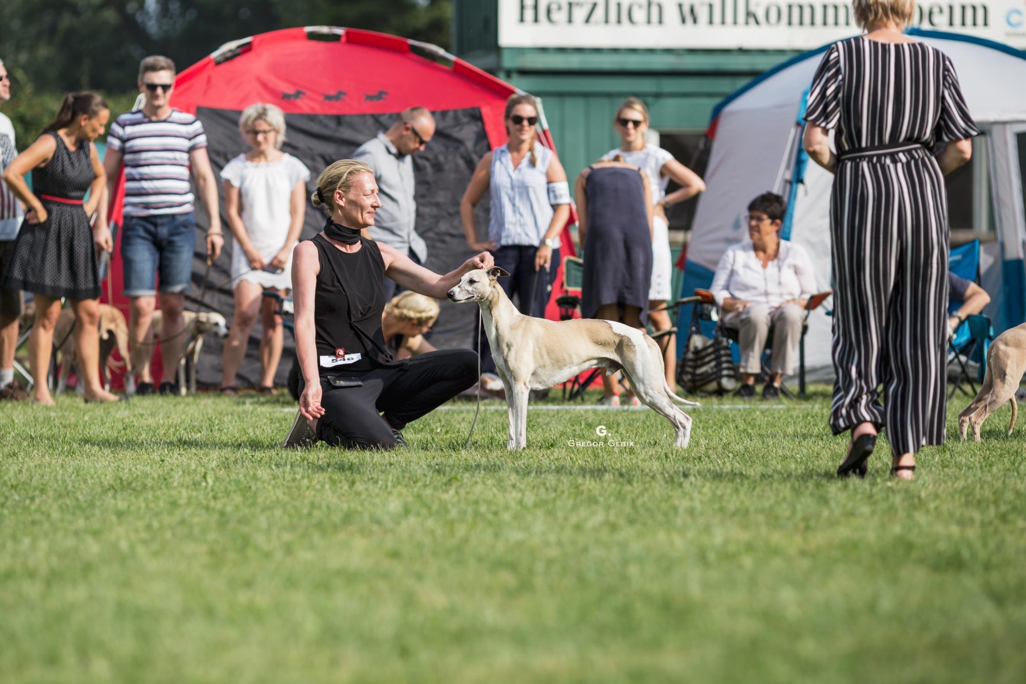 Veteran Winner Donaueschingen 2018 - Mono, Conte del Aqua semper-crescendo beim Sighthound Festival Donaueschingen 2018, Richterin: Pauline Oliver /GB, Foto: Grzegorz Gebik 2018