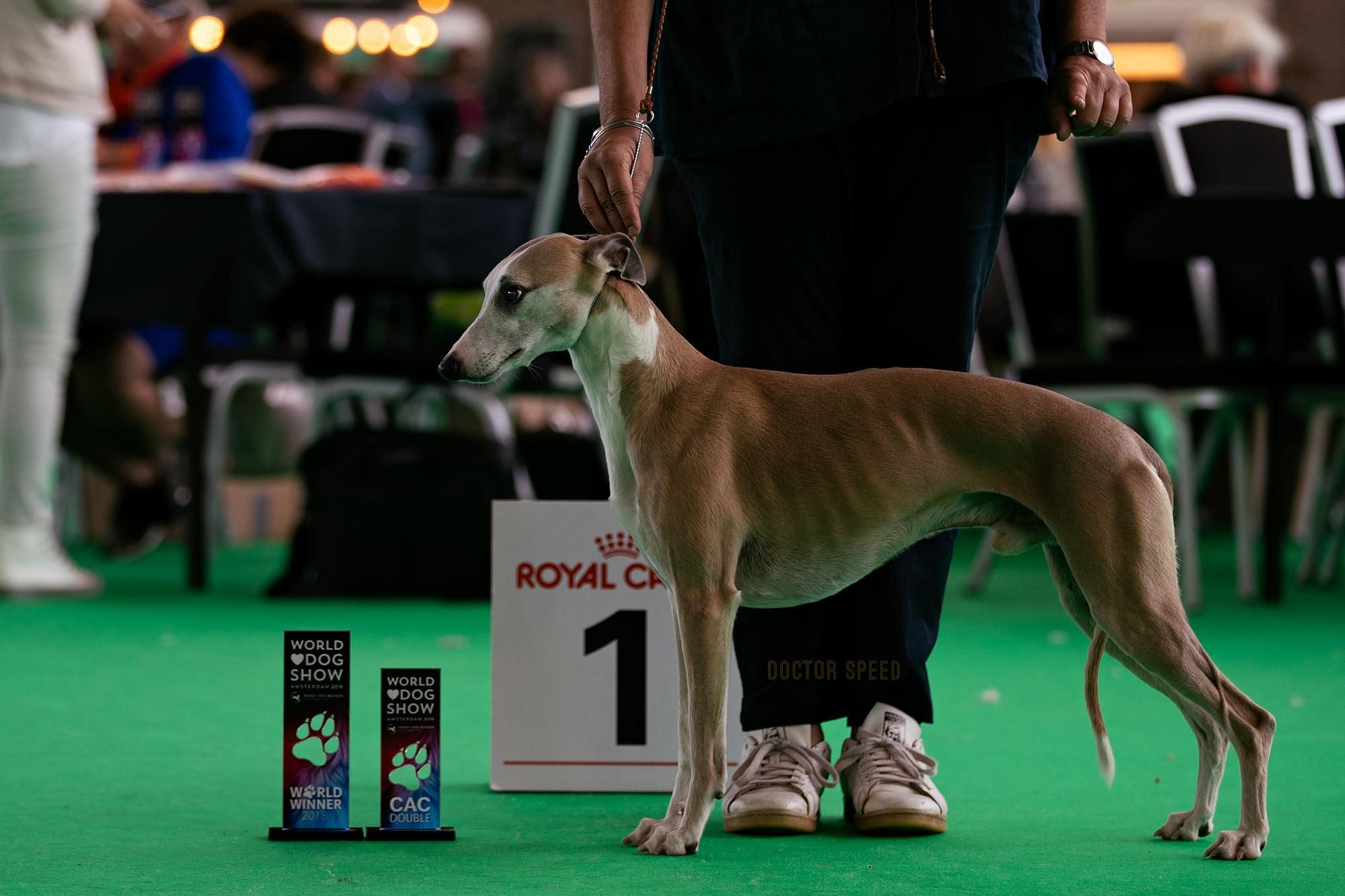 Esedra Miramare ist Weltsieger 2018 - World Dog Show Amsterdam 2018