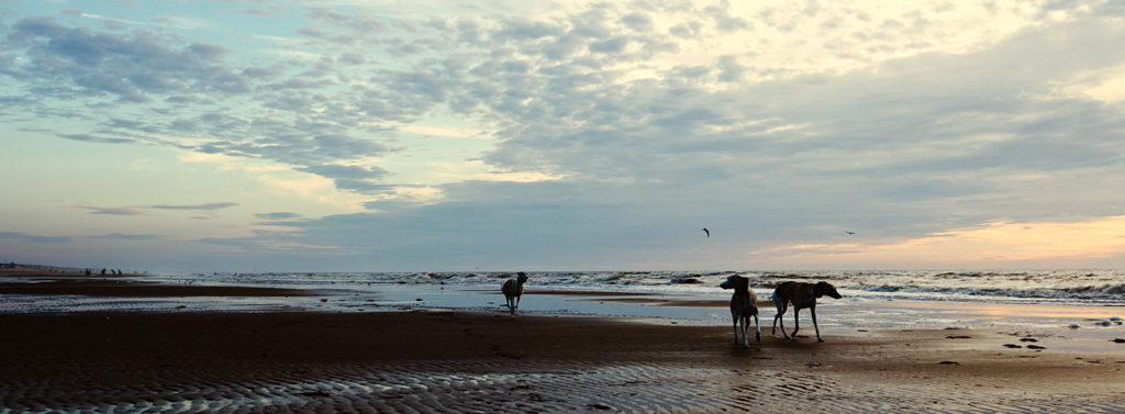 Mono, Danny und Hudson im Sonnenuntergang am Strand von Noordwijk.