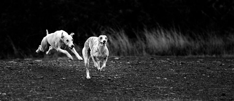 Der krumme Hund - Wenn die Wirbel spazieren gehen.