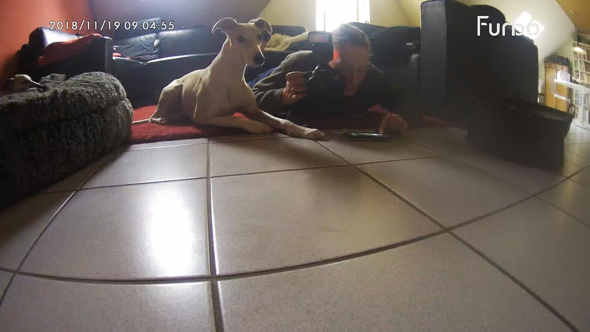 Furbo die Hundekamera im Test - Hupsi immer dabei. Die Kombi aus Schläue und Verfressenheit hat ihn sehr schnell lernen lassen.