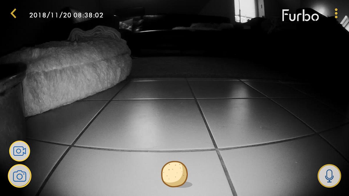 Im Test: Nachtsicht - Ich war heute Morgen einkaufen. Die Furbo App zeigte mir: Ruhe im Karton!