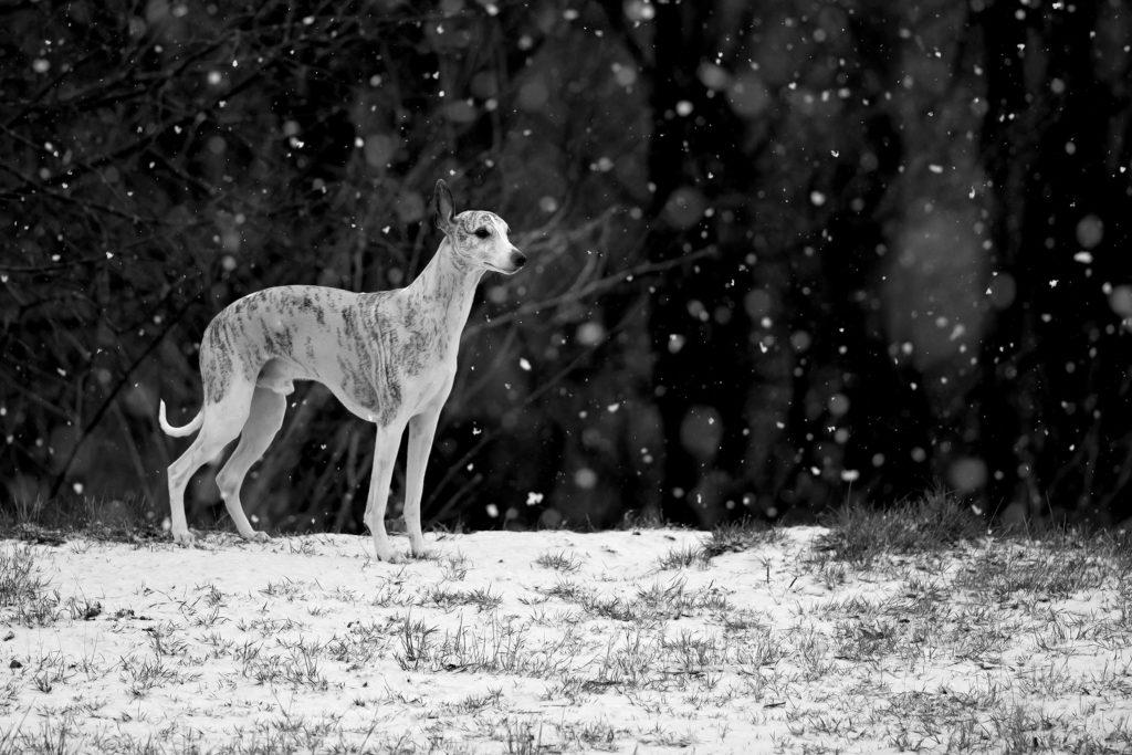Schnee schreit förmlich nach Schwarz-Weiß. Hier Danny zwischen dicken Schneeflocken.