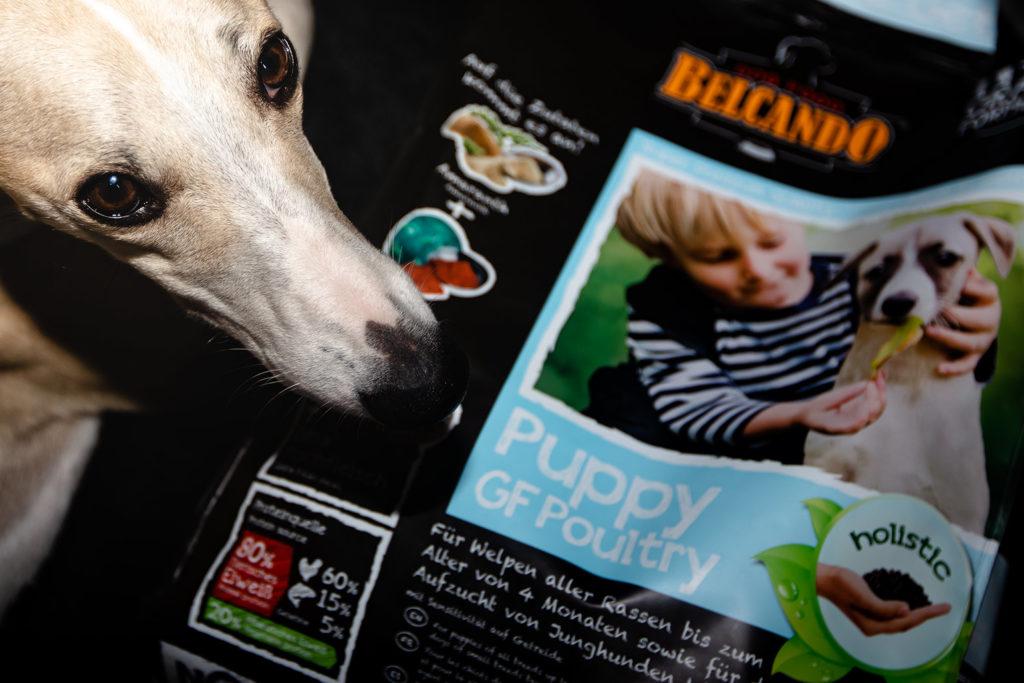 Nein, es sieht nur so aus, als würde Hudson seinem Belcando Puppy GF Poultry nachtrauern. Er nimmt es nach wie vor gerne, würde aber auch alles andere verdrücken.