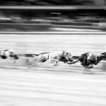 Rennen und Coursing
