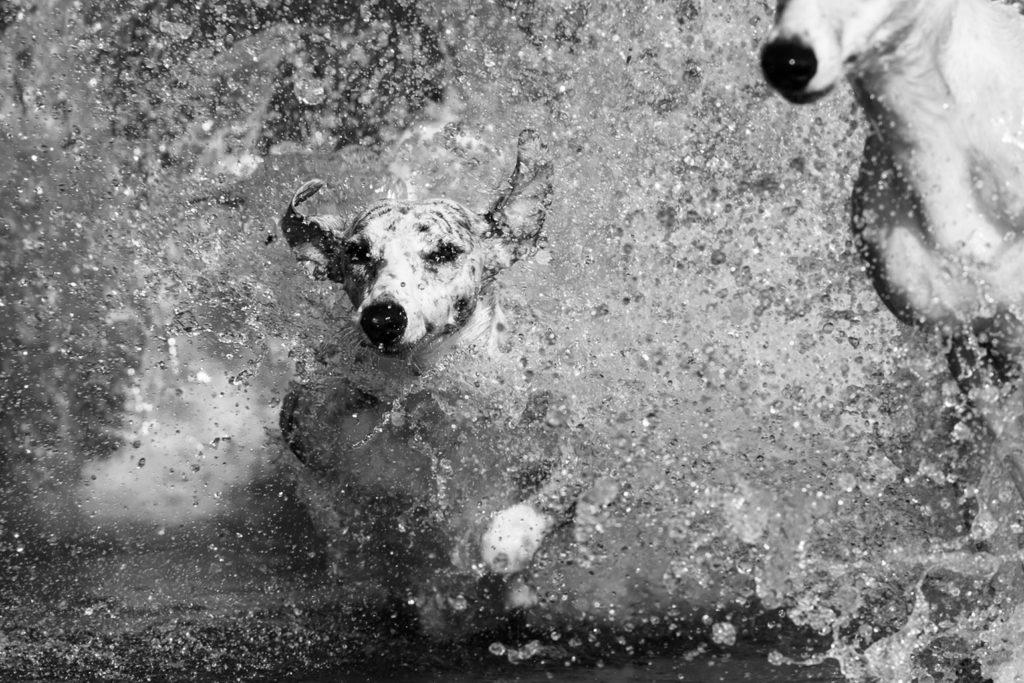 Wasser, Licht und Chaos - Gianna, Hupsis Halbschwester, kennt keine Gnade. Sie ist ebenso ball- wie wasserverrückt.