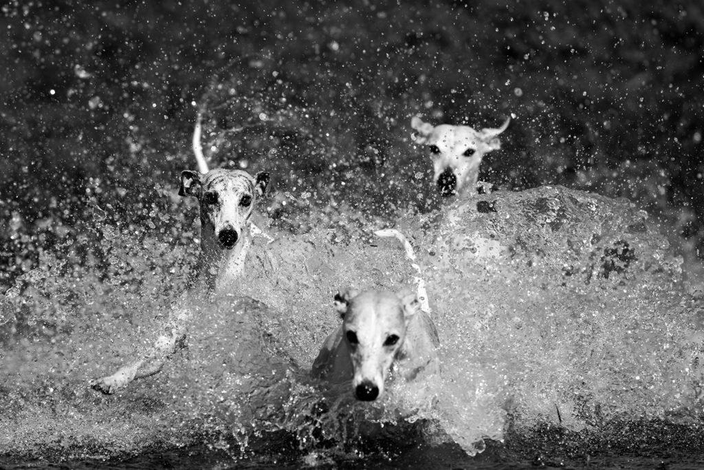 Wasser, Licht, Chaos - Verrückte Familie - Die Halbgeschwister Gianna und Hudson, im Hintergrund Mutter Ivy. Canon EOS 1DX Mark II, Canon EF 300mm 1:2,8L IS II USM, 1/1250 sek., ISO 100, f/3,2