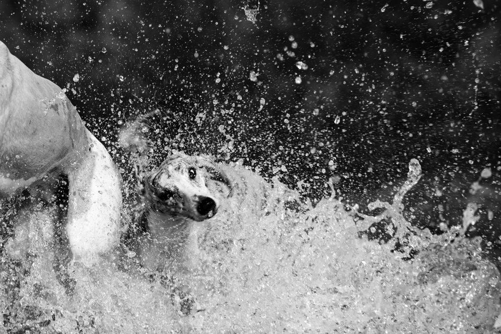 Schütteln im Wasser. Ist das sinnvol? Canon EOS 1DX Mark II, Canon EF 300mm 1:2,8L IS II USM, 1/1250 sek., ISO 100, f/3,2