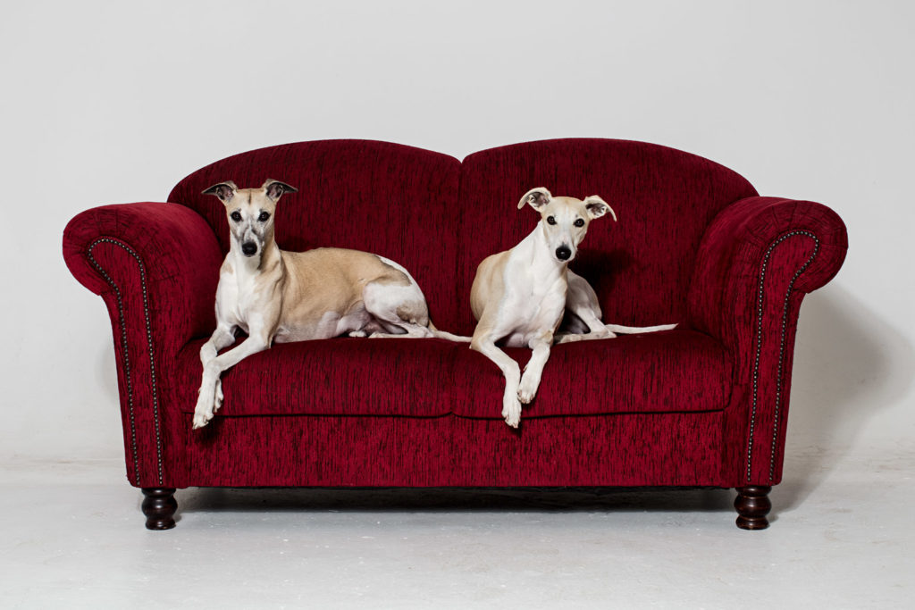 Mono und Hudson auf unserem Schnäppchen. Das rote Sofa ist so gut wie makellos.