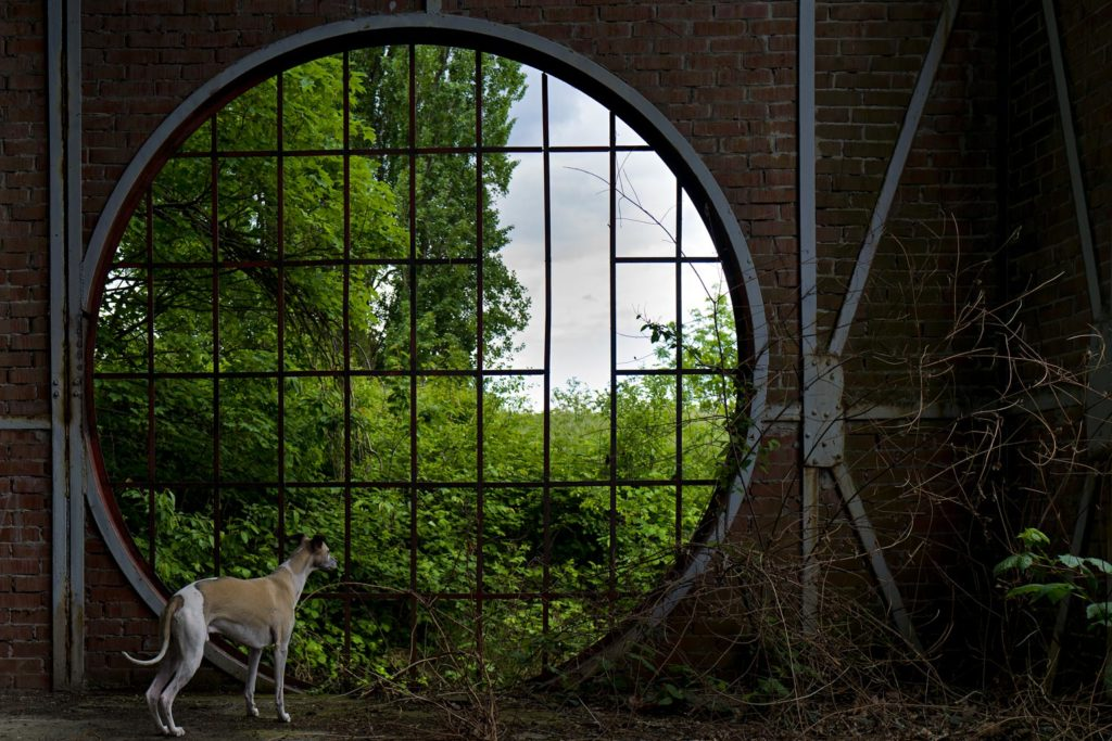 Dieses Fenster in einem alten Förderturm habe ich schon gefühlt hundert mal fotografiert. Mit der Leica Q2 sieht es anders aus.