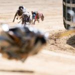 Windspiele auf der Rennstrecke bei der FCI Europameisterschaft 2019