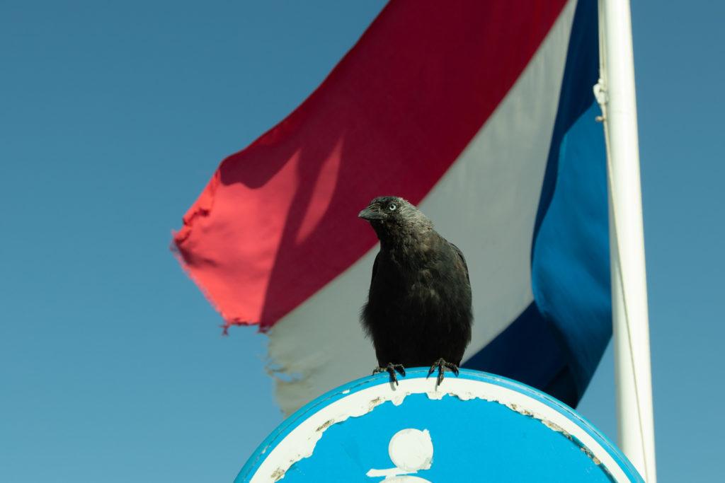 Sogar die Niederländische Flagge ist hinüber. Die kleinen, frechen Dohlen gehören übrigens ebenso zu Zandvoort wie der allgegenwärtige Backfischdunst.