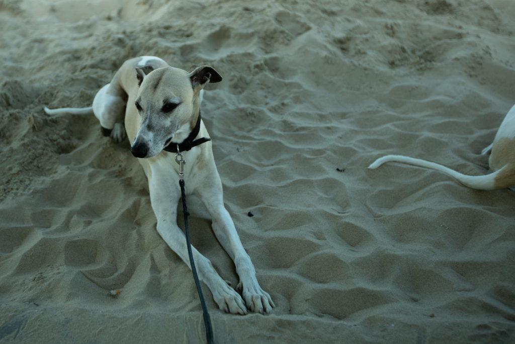 Zandvoort aan Zee - Schön scheußlich!