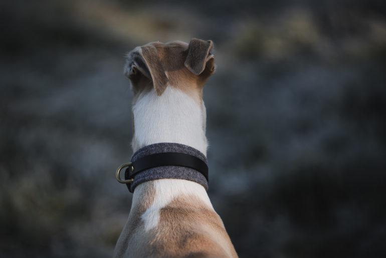 Hund vor dem Supermarkt geklaut? Selbst schuld!