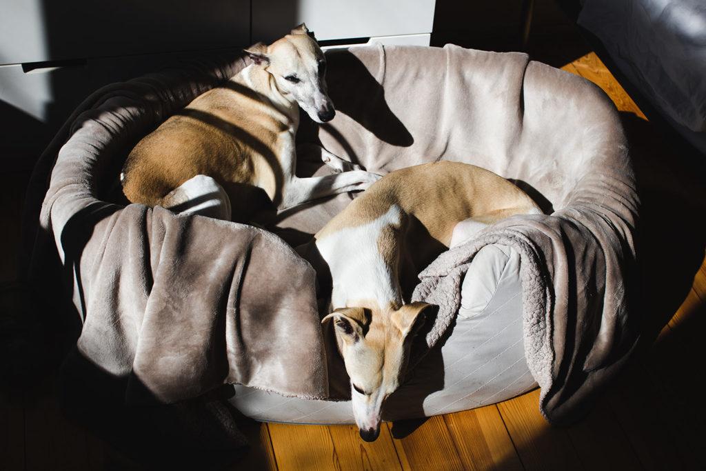 Als die Sonne unser Schlafzimmer wärmt, lassen Mono und Hubi sich grunzend fallen.