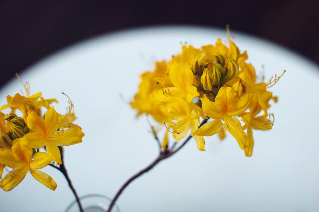 Leben im Lockdown - Das Gelbe vom Ei?