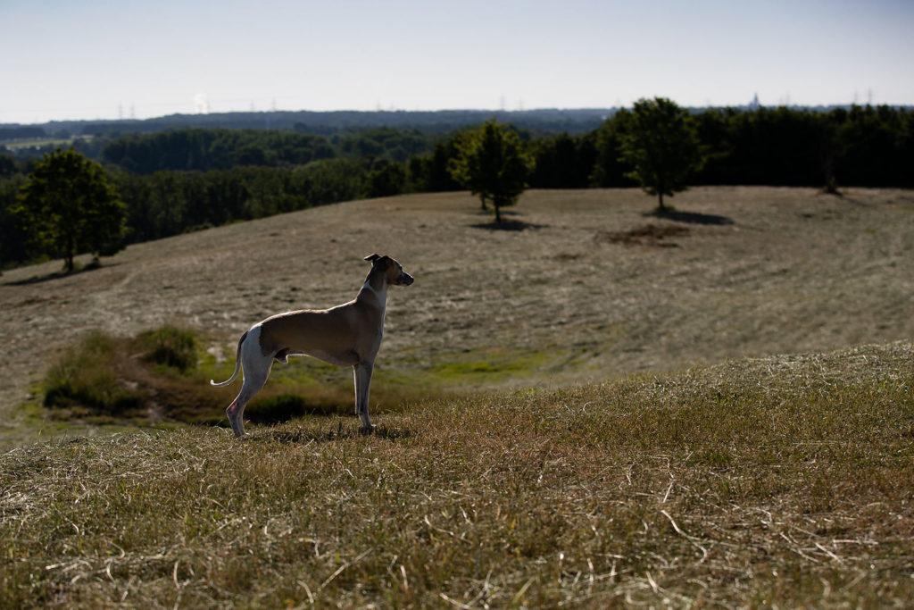 Zehn Jahre mit Mono - Gedanken über einen ganz besonderen Hund