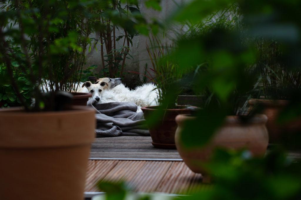 Das Glück, so etwas wie einen Garten zu haben