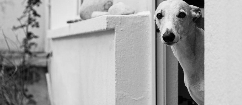 Der Lockdown - Dieses Mal light und mit Arschloch-Hund