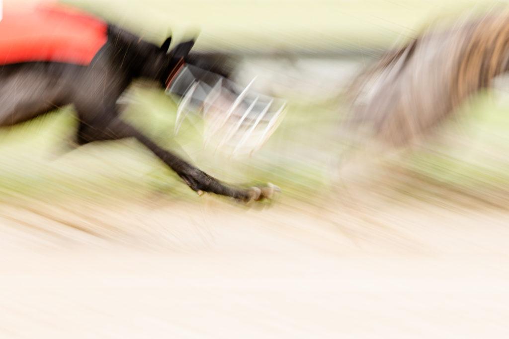Greyhounds auf der Bahn bei der WM-Revanche 2020 in Gelsenkirchen